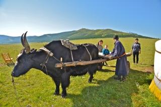 juliamalchow_mongolei-19