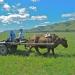 juliamalchow_mongolei-24