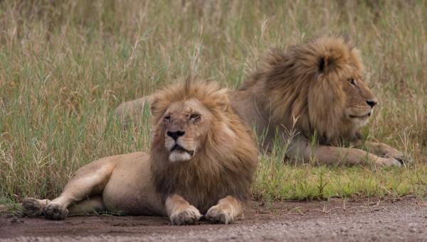Ratgeber Safari mit Kindern Tansania mit Kindern 1