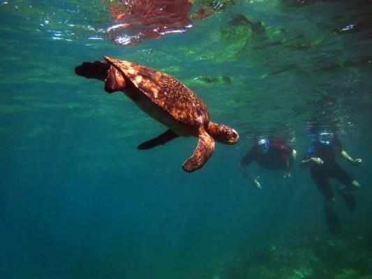 Reisetipp - Eine Woche auf den Galapagos Inseln - Schnorcheln Unterwasserwelt