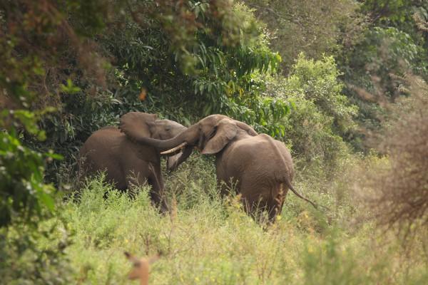 Meine 10 Top-Reiseziele für 2015 - Tansania