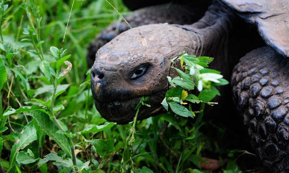 Lieblingshotel- Galapagos Safari Camp 14