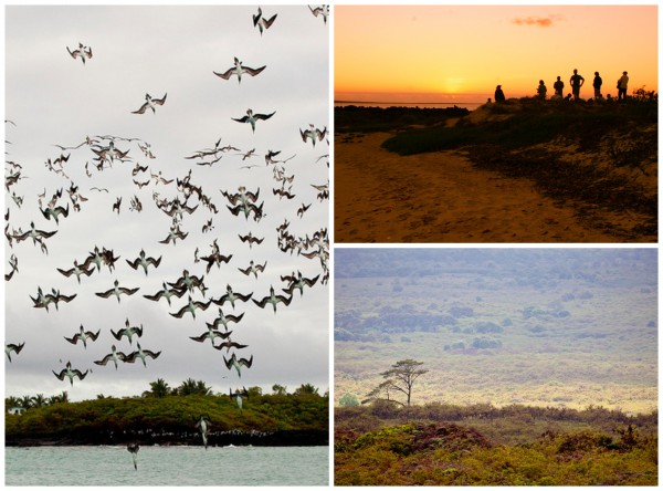 Luxuriöse Abenteuer in Ecuador - Die Galapagos Inseln | Julia Malchow