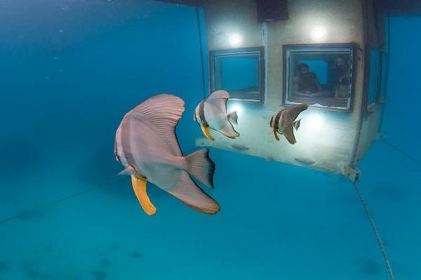 Lieblingshotels, The Manta Resort, Unterwasserzimmer, Underwater room, Pemba, Sansibar, Tansania 3