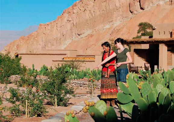 Alto Atacama Desert Lodge - Julia Malchow Lieblingshotels - Luxushotels Atacamawüste Chile Südamerika - Gardens 1