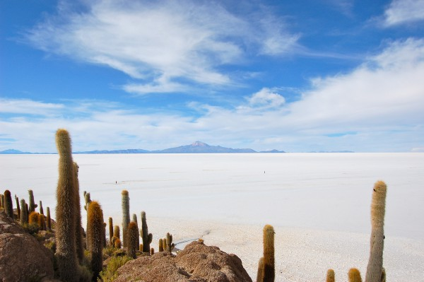 Salar de Uyuni Incahuasi Insel Kakteen