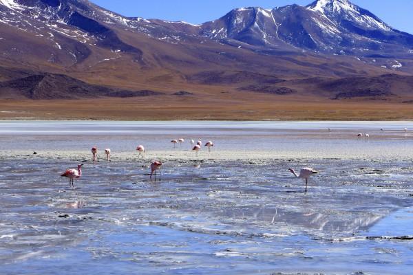 Salar de Uyuni Salzsee Bolivien Flamingo Pinke Lagune