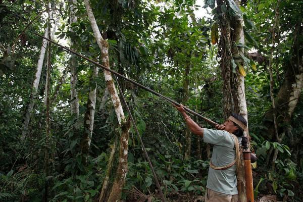 Huaorani Ecolodge 1