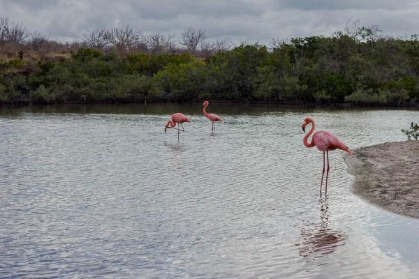 Galapagos Kreuzfahrt-2