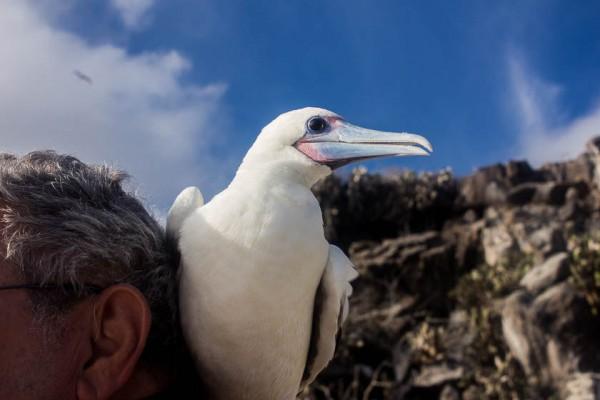 Galapagos Kreuzfahrt-36