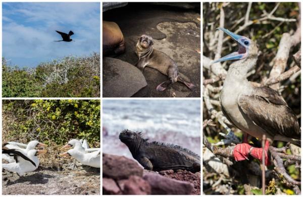 Galapagos Kreuzfahrt WIldlife Watching